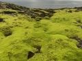 Mose-med-hjerte-Grønland-ligger-bak-havet-et-sted