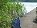 Steg in Småland