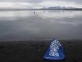 Einer Robbe in Nordisland