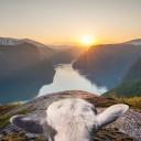 © www.visitnorway.com/sheepwithaview