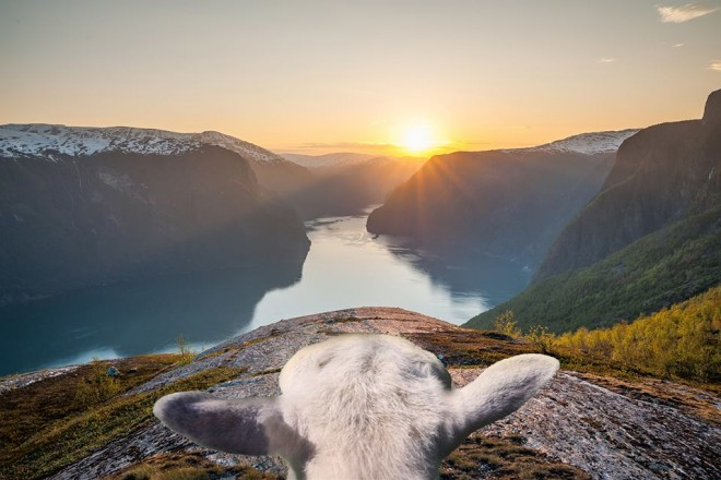 © www.visitnorway.com/sheepwithaview