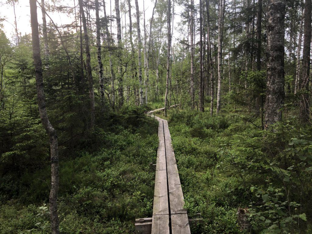 Trollstigen in Målerås.